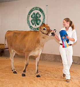 champion dairy showman