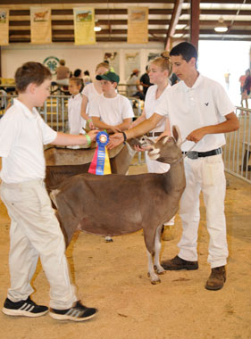 champion goat showman
